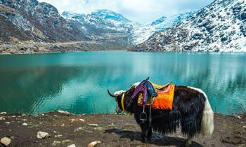Splendour Himalayan – Gangtok Tour
