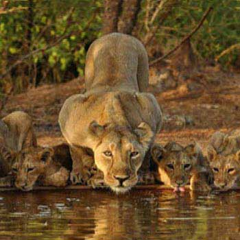 The Wild and Whirl of Gujarat (4  Nights) Tour