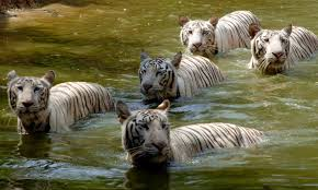 Sundarban Package Tour