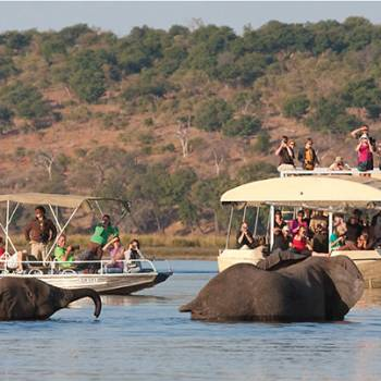 Chobe Day Trip Tour