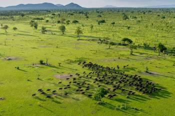 3 Day Safari to Selous Game Reserve