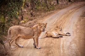 Gir National Park Tour 3 Days