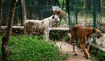 Bannerghatta National Park Tour