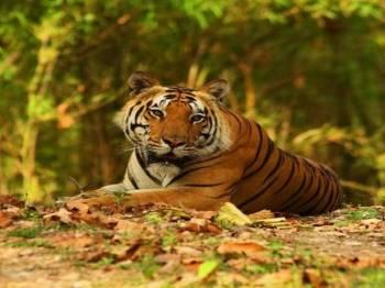 Short Trip Kanha Bandhavgarh