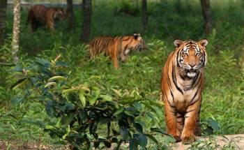 Sundarban (2N/3D)