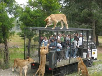 Wildlife 21 Day Tour