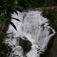 Bangalore - Mysore - Wayanad Tour