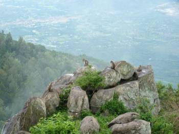 Bangalore Yercaud Hill Station Tour Package