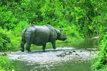 Dooars Tour - River, Bird, Rhino