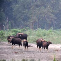 Dooars Jungle Safari,Elephant Ride,Leopard