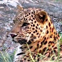 Dooars Jungle Safari, Temples Tour