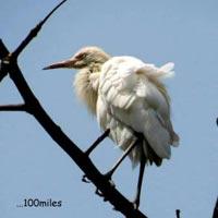 Dooars Tour - River, Bird, Rhino