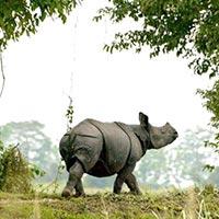The Rhino Land Tour