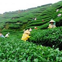The Tea City of India Tour