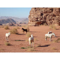 Horse Riding Holiday Tour