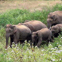 Dooars - Lataguri - Bindu - Madarihat Tour Package