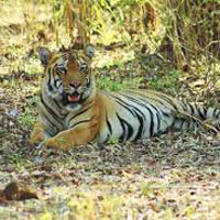 Unforgettable Kanha Tour