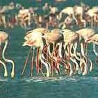 Rajasthan Wildlife with Golden Triangle Tour