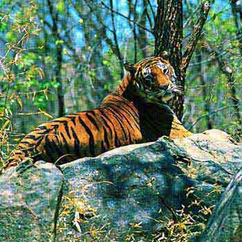 Kerala Wild Life Tour