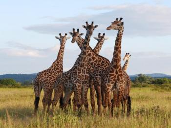 Explore Tanzania's Exotic Parks Package