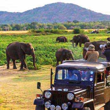 Sri Lanka: Let's See Paradise Package