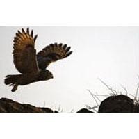 Gujarat Wildlife & Birding Tour