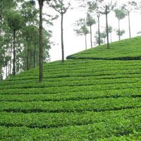 Kerala Tour - DP5D(CMAC)