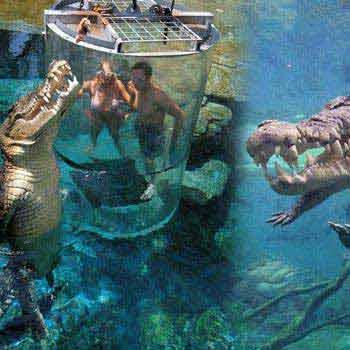 Crocodile Tour Of Australia