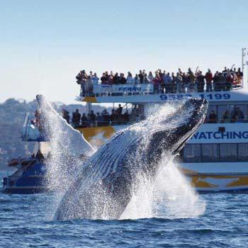 Whale Tour of Australia