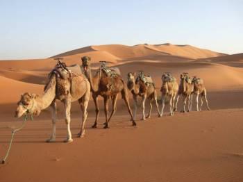 Romance of Desert Tour