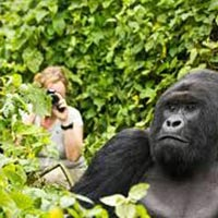 Gorilla Tracking, Wildlife & Chimpanzee Tour