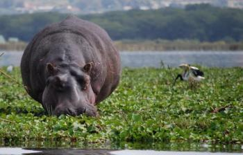 3 Days Nairobi – Lake Nakuru & Lake Naivasha Bird Watching Tour Package