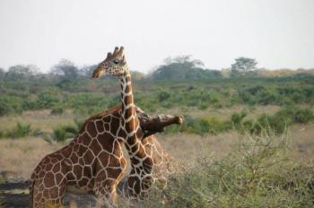 2 Days Masai Mara Safari By Air Package
