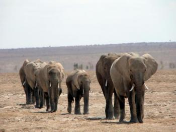 3 Days Tsavo East Safari Tour Package