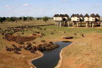 3 Days Tsavo East & Saltlick Safari Package