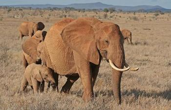 2 Days Tsavo East Road Safari Package