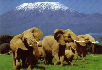 Tsavo East & Amboseli Package