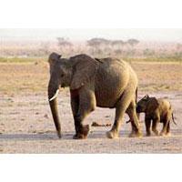 Amboseli - Aberdare - Lake Nakuru - Masai Mara Tour