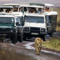 Tanzania Wildlife Experience Tour