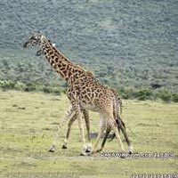 7 Days Lake Manyara / Ngororngoro Crater/ Serengeti Lodges Safari Tanzania