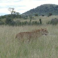 Kenya Wildlife and Tented Camp Big Five Private Safari Tour