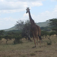 Best of Kenya Wilderness to Beach Private Safari Tour