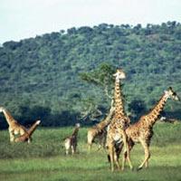Amboseli Elephant Lodge Safari