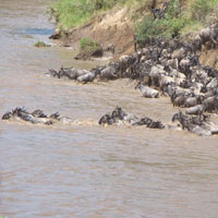 Best of Kenya Wildlife Viewing and Birding Group Safari Tour