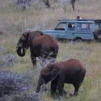 Amboseli and Tsavo Game Viewing Private Safari Tour