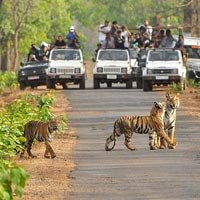 3 Jeep Safaris Tour