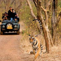 6 Jeep Safaris Tour