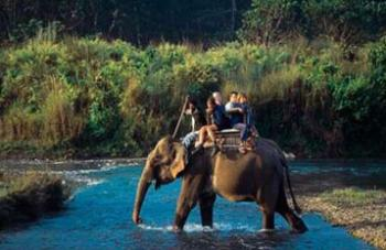 Wildlife Safari Bardia in National Park
