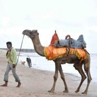Amazing Tour of Kutch