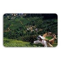 04 Nights 05 Days Chail Shimla